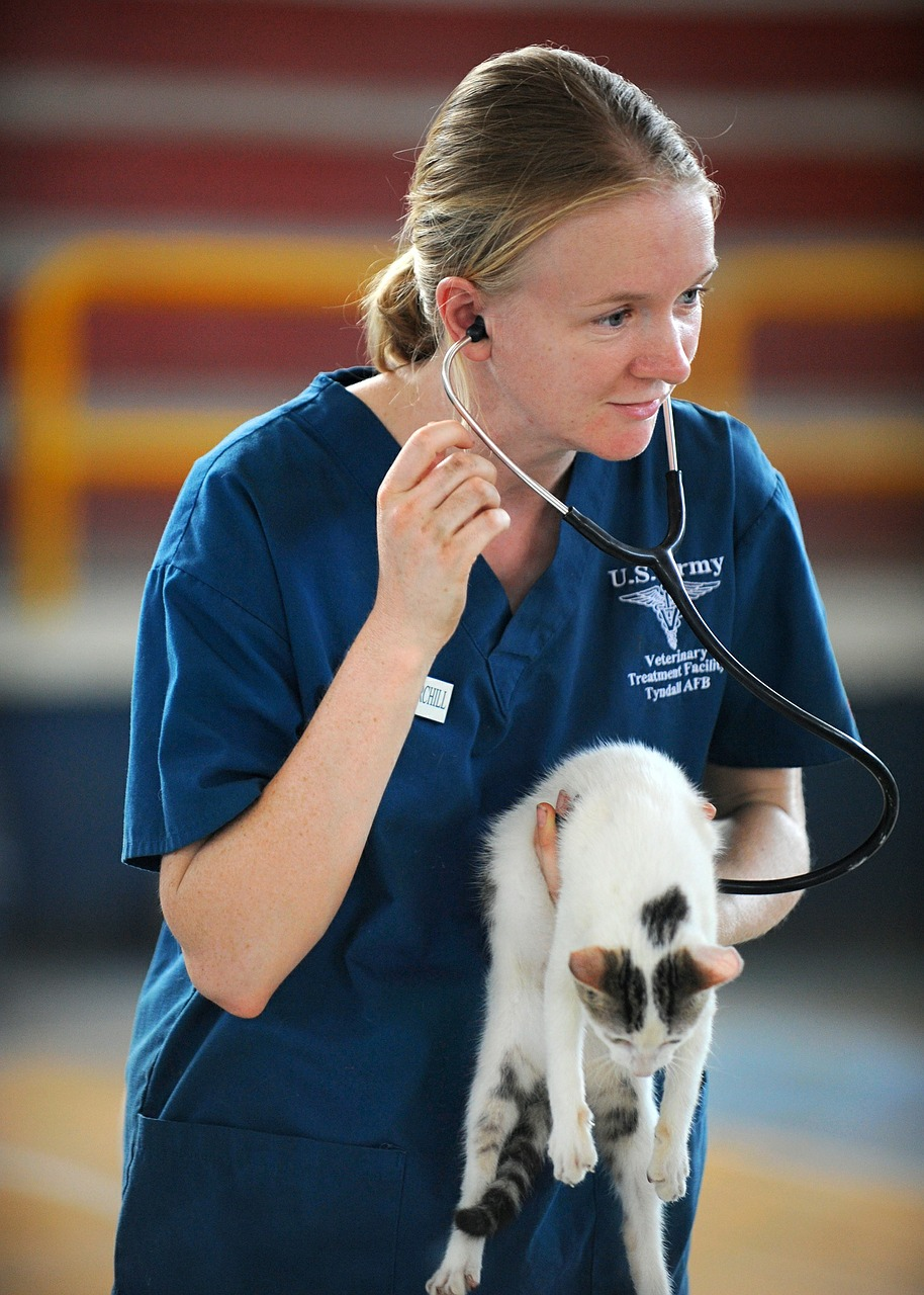 veterinary marketing photo